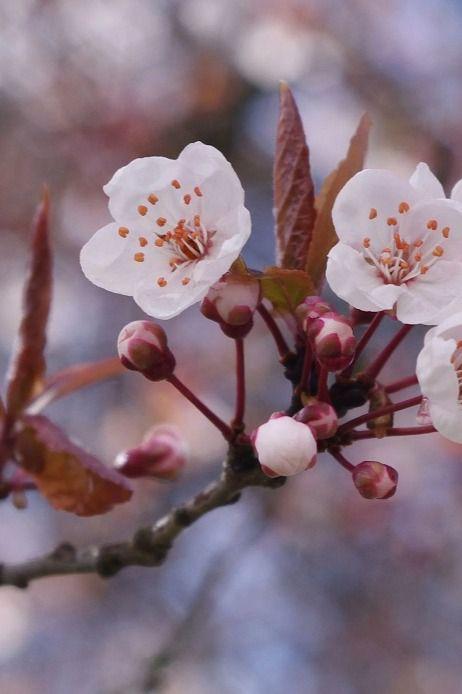 La razón poética como un universal: el haiku japonés y la lírica galaico-portuguesa